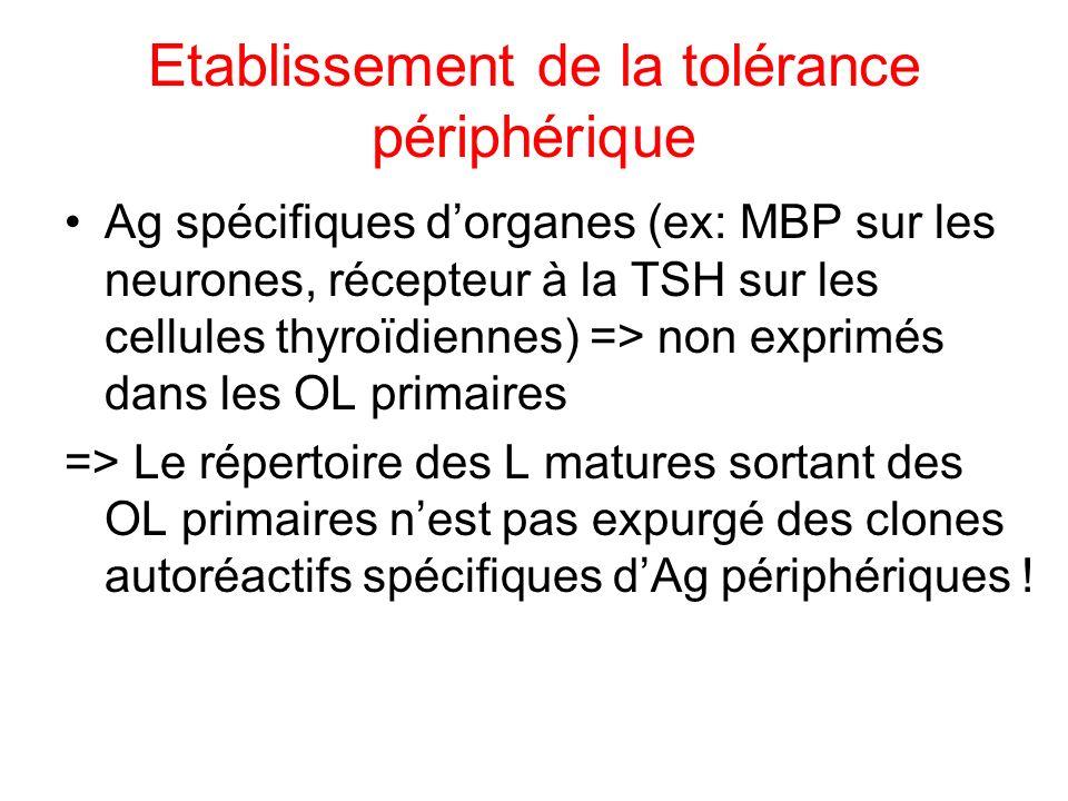 Etablissement de la tolérance périphérique Ag spécifiques dorganes (ex: MBP sur les neurones, récepteur à la TSH sur les cellules thyroïdiennes) => no