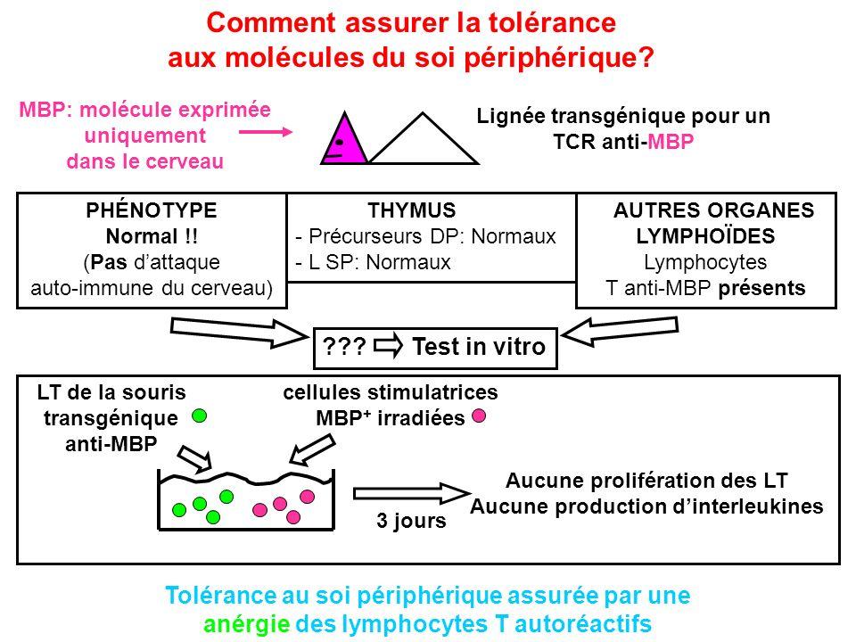 Lignée transgénique pour un TCR anti-MBP Comment assurer la tolérance aux molécules du soi périphérique? PHÉNOTYPE Normal !! (Pas dattaque auto-immune