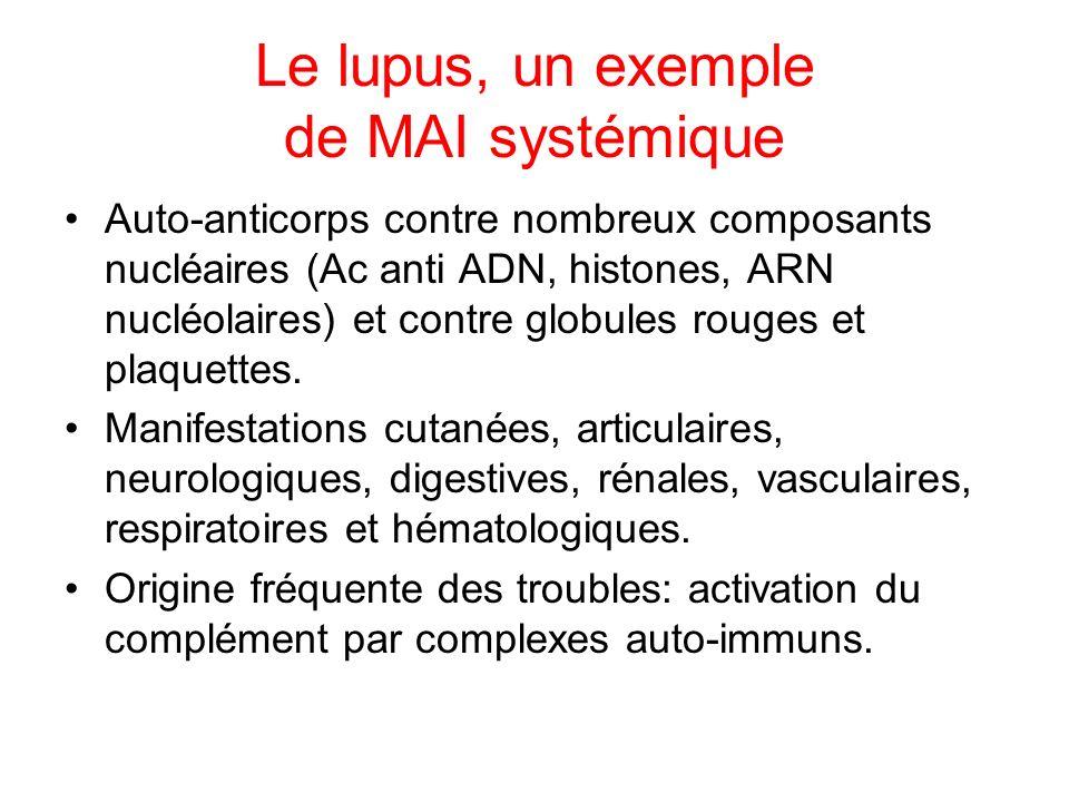 Le lupus, un exemple de MAI systémique Auto-anticorps contre nombreux composants nucléaires (Ac anti ADN, histones, ARN nucléolaires) et contre globul