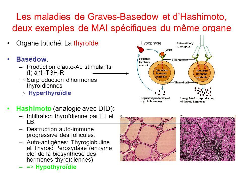 Les maladies de Graves-Basedow et dHashimoto, deux exemples de MAI spécifiques du même organe Organe touché: La thyroïde Basedow: –Production dauto-Ac