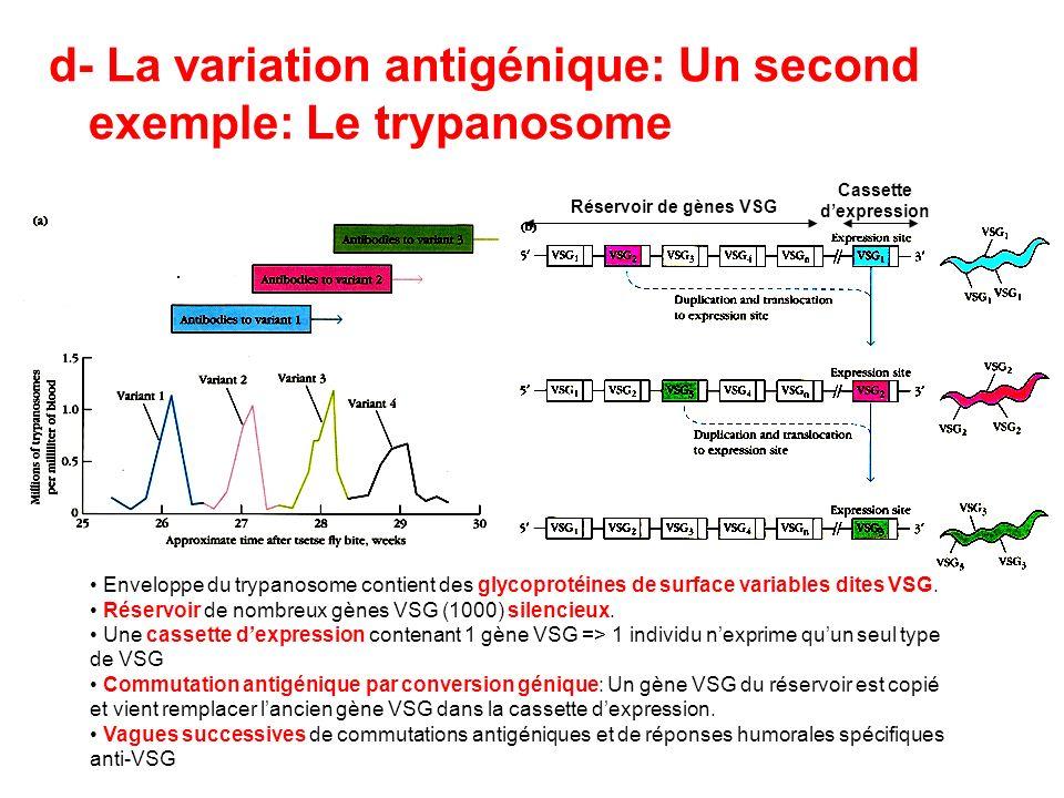 d- La variation antigénique: Un second exemple: Le trypanosome Enveloppe du trypanosome contient des glycoprotéines de surface variables dites VSG. Ré