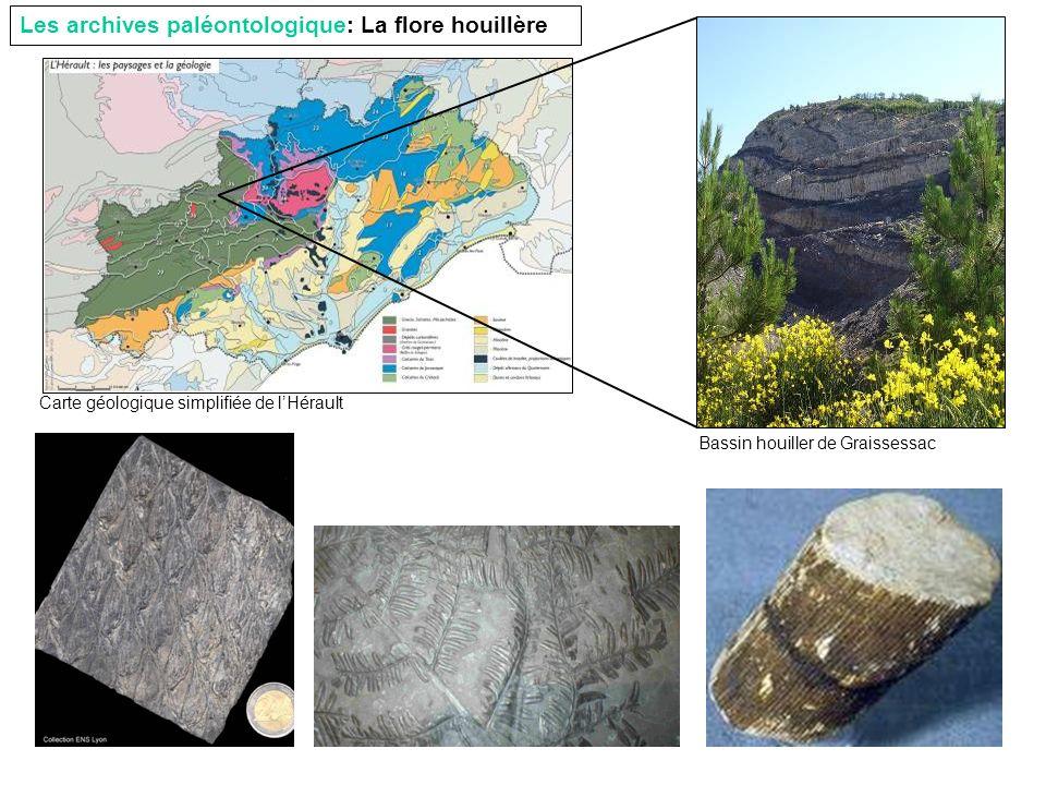 Les archives paléontologique: La flore houillère Carte géologique simplifiée de lHérault Bassin houiller de Graissessac
