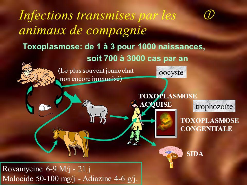 Autres maladies dinoculation Q Mycobactérium marinum u Granulome des aquariums u Incubation lente u Papule abcédation dos de la main u Histologie : BAAR Clarithromycine, éthambutol, rifabutine Q Tuberculose u Chien, chat