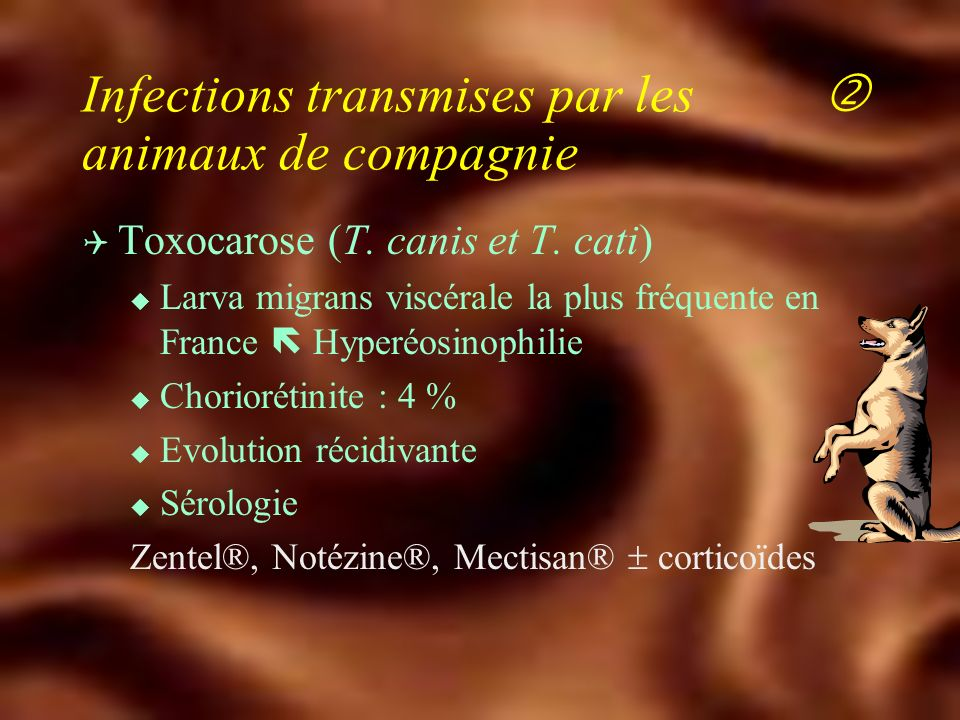 (Le plus souvent jeune chat non encore immunisé) TOXOPLASMOSE ACQUISE TOXOPLASMOSE CONGENITALE Rovamycine 6-9 M/j - 21 j Malocide 50-100 mg/j - Adiazine 4-6 g/j.