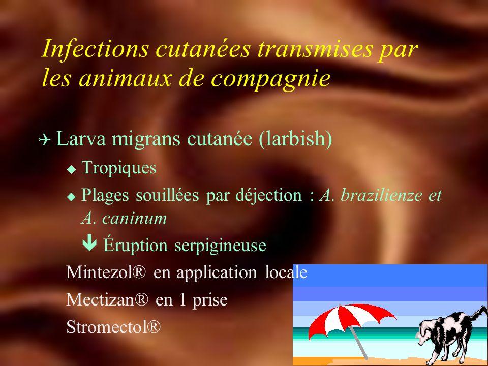 Infections transmises par les animaux de compagnie Q Hydatidose u Echinococcus granulosus u Rare dans nos régions u Ténia du chien u Kyste hydatique albendazole : Eskazole® 400 mg x 2 + chirurgie
