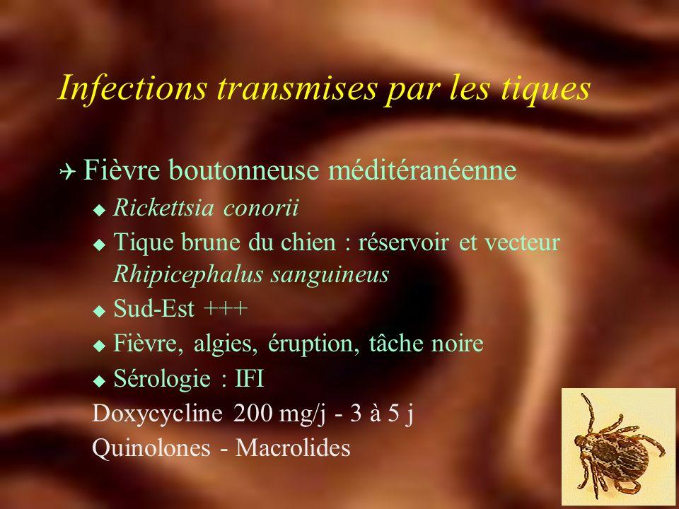 Zoonoses transmises par les tiques Q Maladie de Lyme u Morsure de tique (Ixodes ricinus) : Borrelia burgdorferi, B. garinii, B. afzelii u Campagnols,