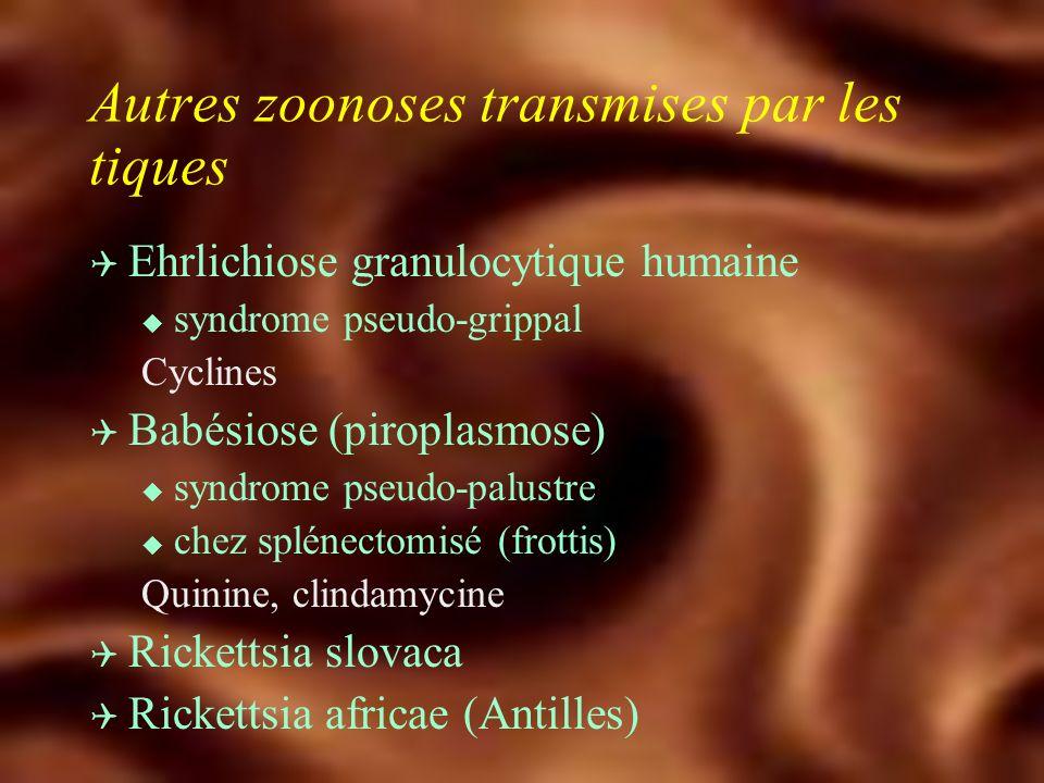 Infections transmises par les tiques Q Fièvre boutonneuse méditéranéenne u Rickettsia conorii u Tique brune du chien : réservoir et vecteur Rhipicephalus sanguineus u Sud-Est +++ u Fièvre, algies, éruption, tâche noire u Sérologie : IFI Doxycycline 200 mg/j - 3 à 5 j Quinolones - Macrolides