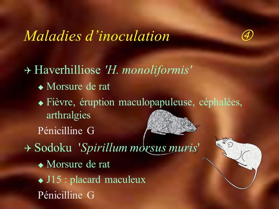 Q Infections à Bartonella henselae u Agent de la maladie des Griffes du chat : puce chat : bactériémie asymptomatique homme : adénite aiguë fistulisat