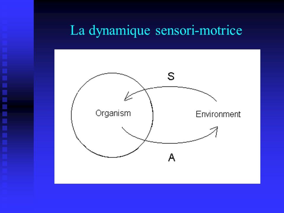 La dynamique sensori-motrice