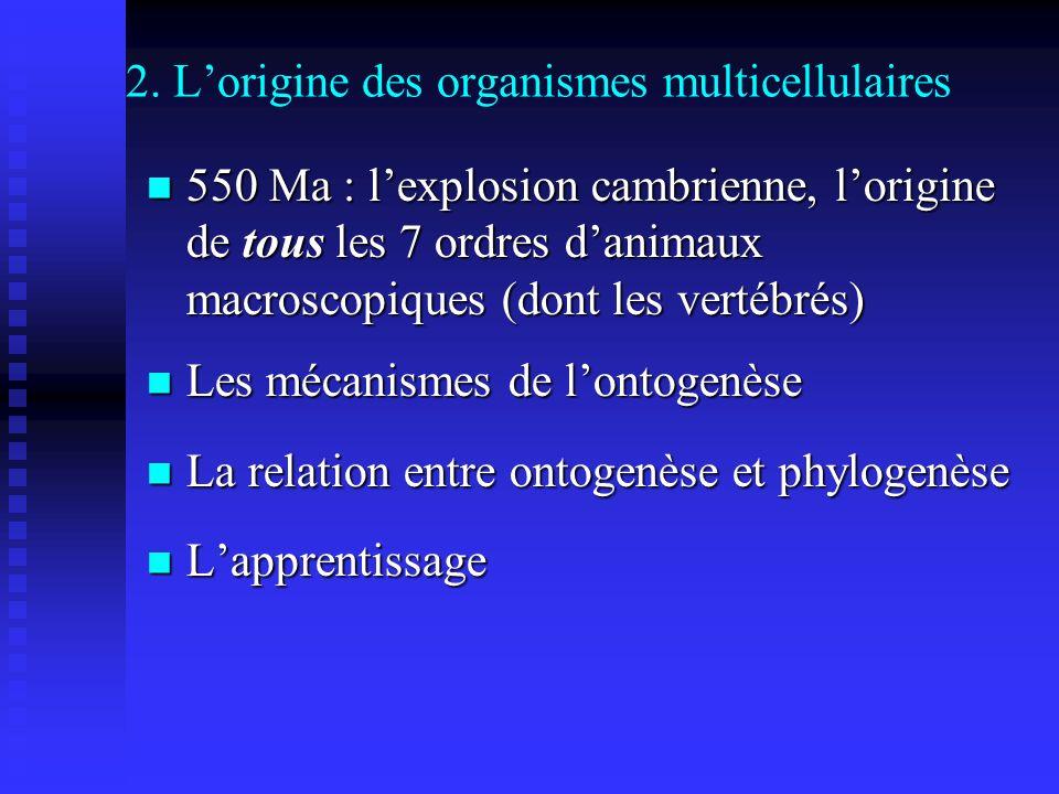 2. Lorigine des organismes multicellulaires 550 Ma : lexplosion cambrienne, lorigine de tous les 7 ordres danimaux macroscopiques (dont les vertébrés)