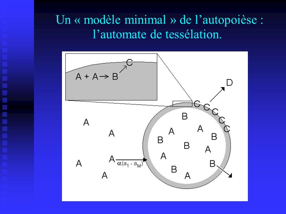 Un « modèle minimal » de lautopoièse : lautomate de tessélation.