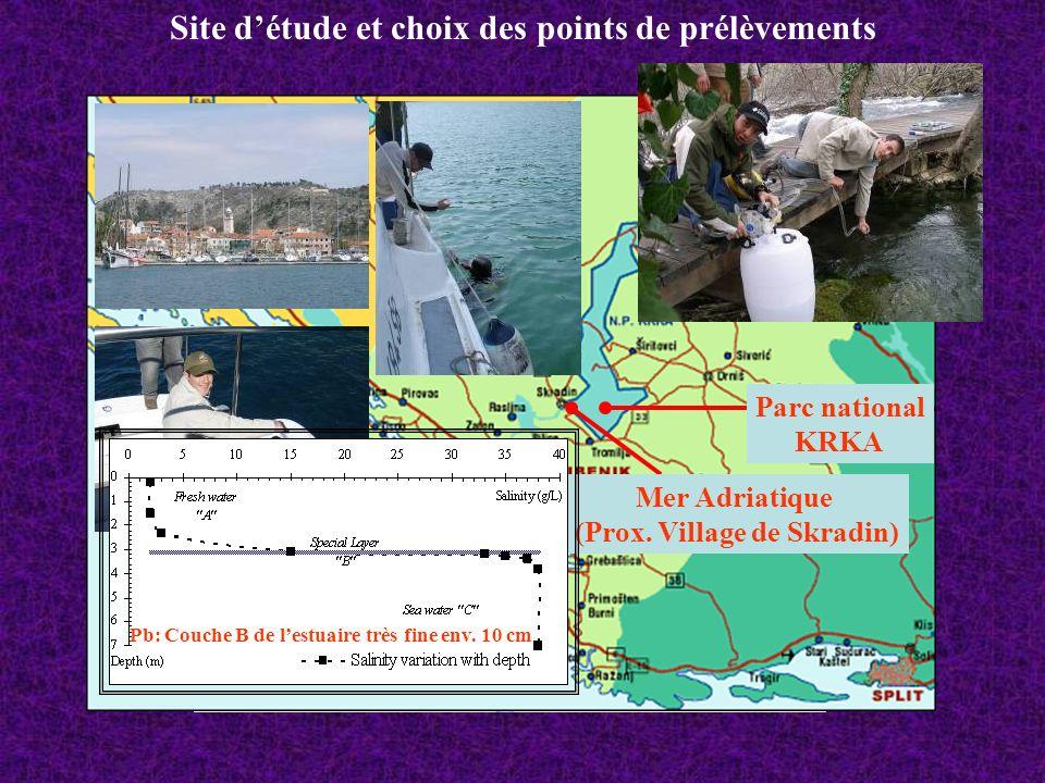 Site détude et choix des points de prélèvements Parc national KRKA Mer Adriatique (Prox. Ile de Zlarin) Mer Adriatique (Prox. Village de Skradin) Pb: