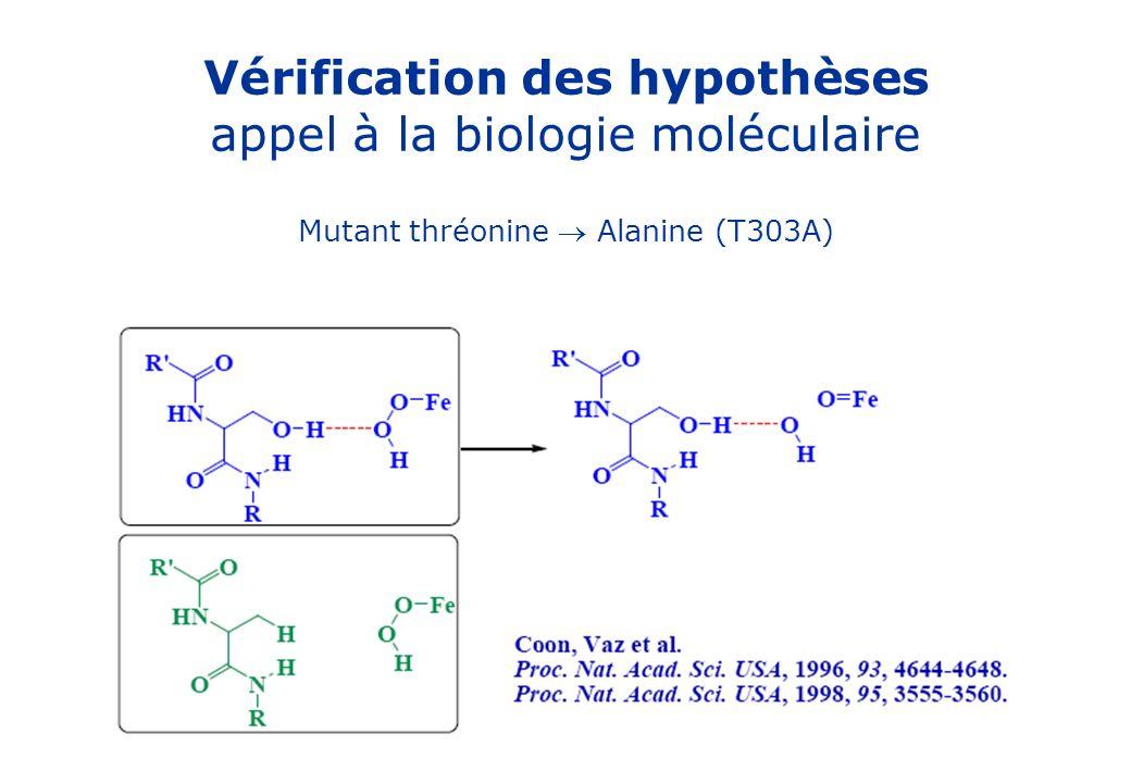Vérification des hypothèses appel à la biologie moléculaire Mutant thréonine Alanine (T303A)