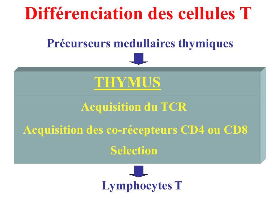 Différenciation des cellules T Acquisition du TCR Selection Acquisition des co-récepteurs CD4 ou CD8 THYMUS Précurseurs medullaires thymiques Lymphocy