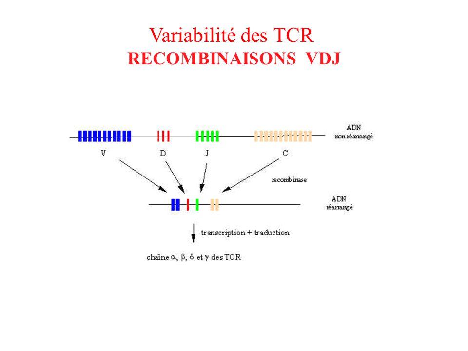 Variabilité des TCR RECOMBINAISONS VDJ