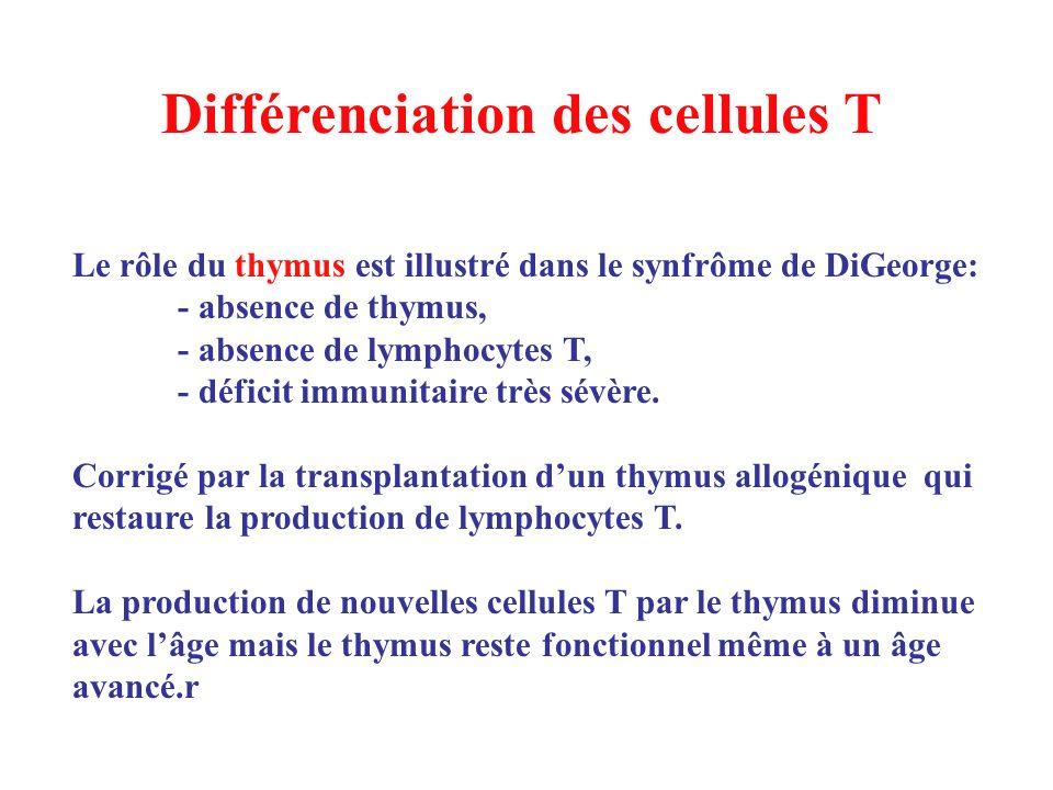 Différenciation des cellules T Le rôle du thymus est illustré dans le synfrôme de DiGeorge: - absence de thymus, - absence de lymphocytes T, - déficit