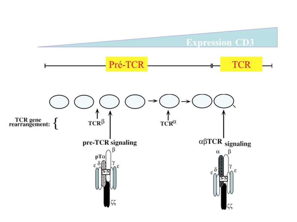 Pré-TCRTCR Expression CD3