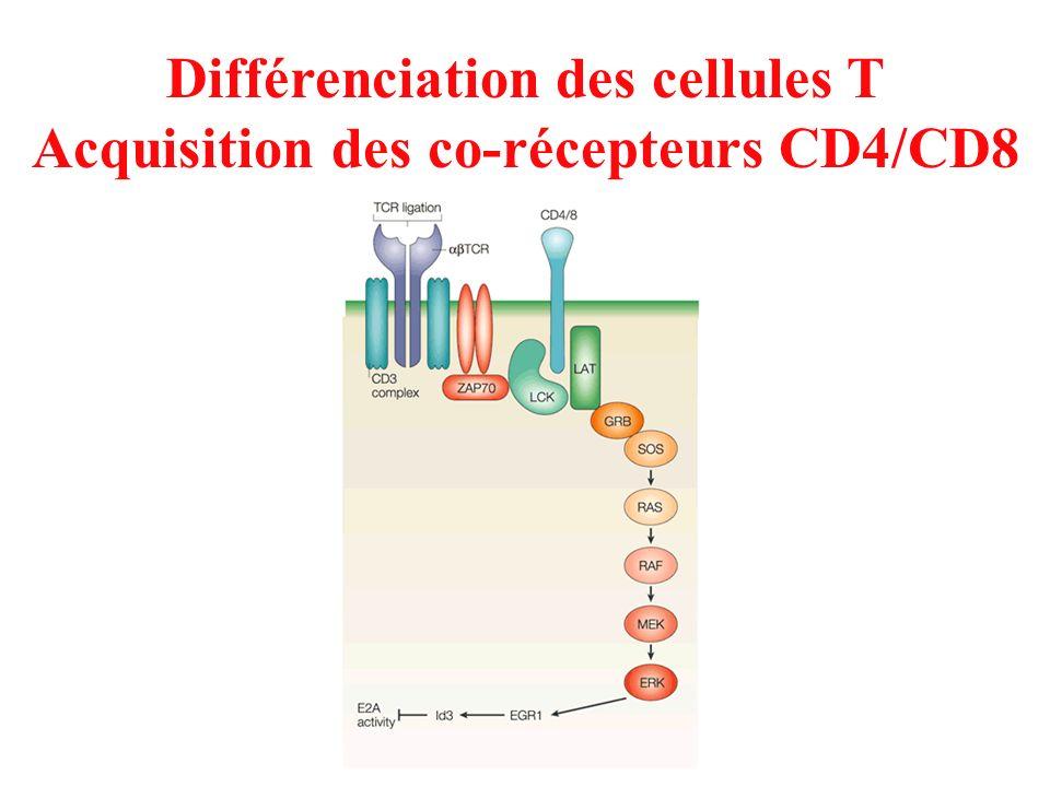 Différenciation des cellules T Acquisition des co-récepteurs CD4/CD8