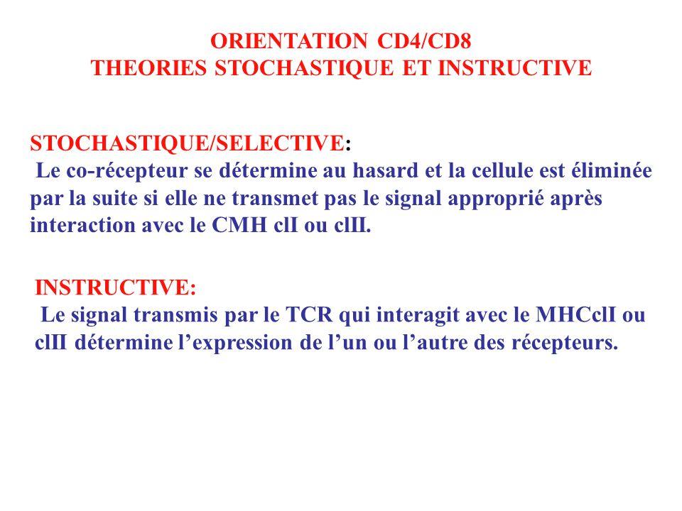 ORIENTATION CD4/CD8 THEORIES STOCHASTIQUE ET INSTRUCTIVE STOCHASTIQUE/SELECTIVE: Le co-récepteur se détermine au hasard et la cellule est éliminée par