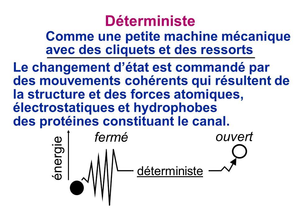 Déterministe Comme une petite machine mécanique avec des cliquets et des ressorts Le changement détat est commandé par des mouvements cohérents qui résultent de la structure et des forces atomiques, électrostatiques et hydrophobes des protéines constituant le canal.