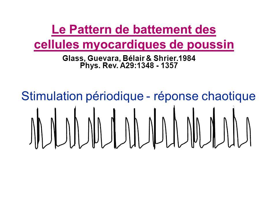 Stimulation périodique - réponse chaotique Le Pattern de battement des cellules myocardiques de poussin Glass, Guevara, Bélair & Shrier.1984 Phys.