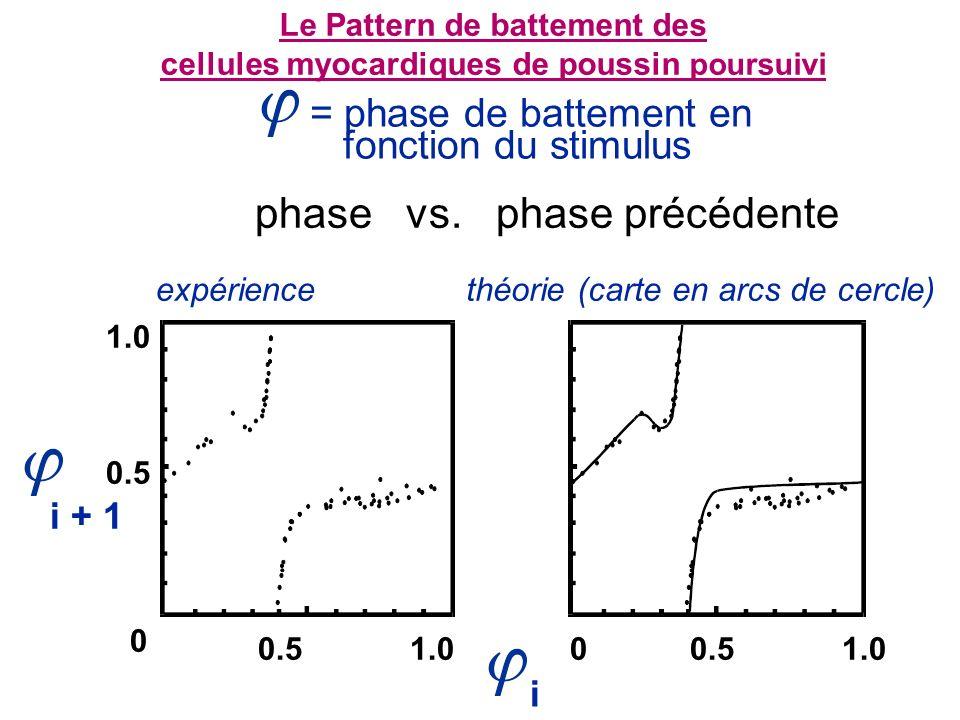 = phase de battement en fonction du stimulus Le Pattern de battement des cellules myocardiques de poussin poursuivi phase vs.