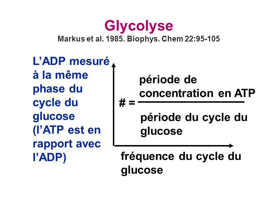 Glycolyse Markus et al.1985. Biophys.