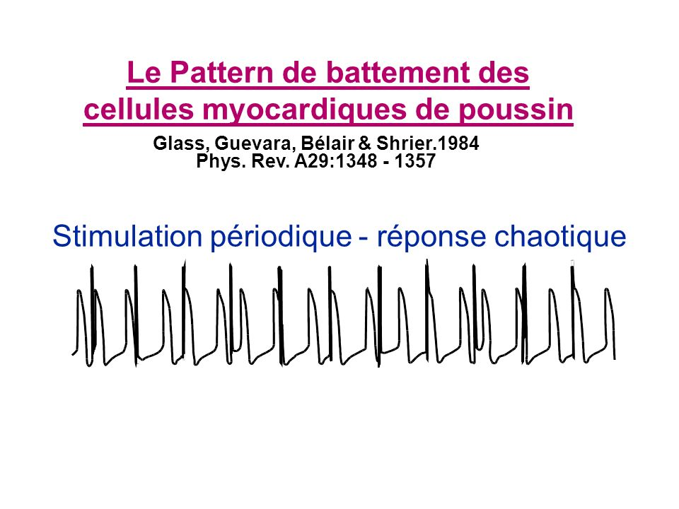 Stimulation périodique - réponse chaotique Le Pattern de battement des cellules myocardiques de poussin Glass, Guevara, Bélair & Shrier.1984 Phys. Rev