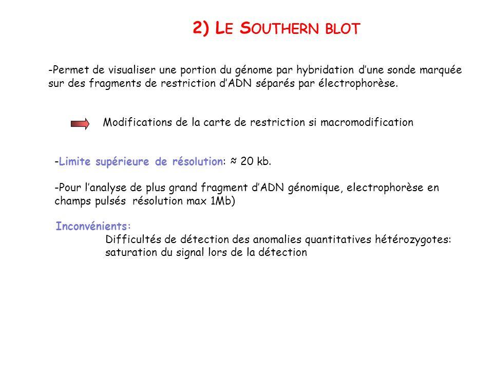2) L E S OUTHERN BLOT -Permet de visualiser une portion du génome par hybridation dune sonde marquée sur des fragments de restriction dADN séparés par