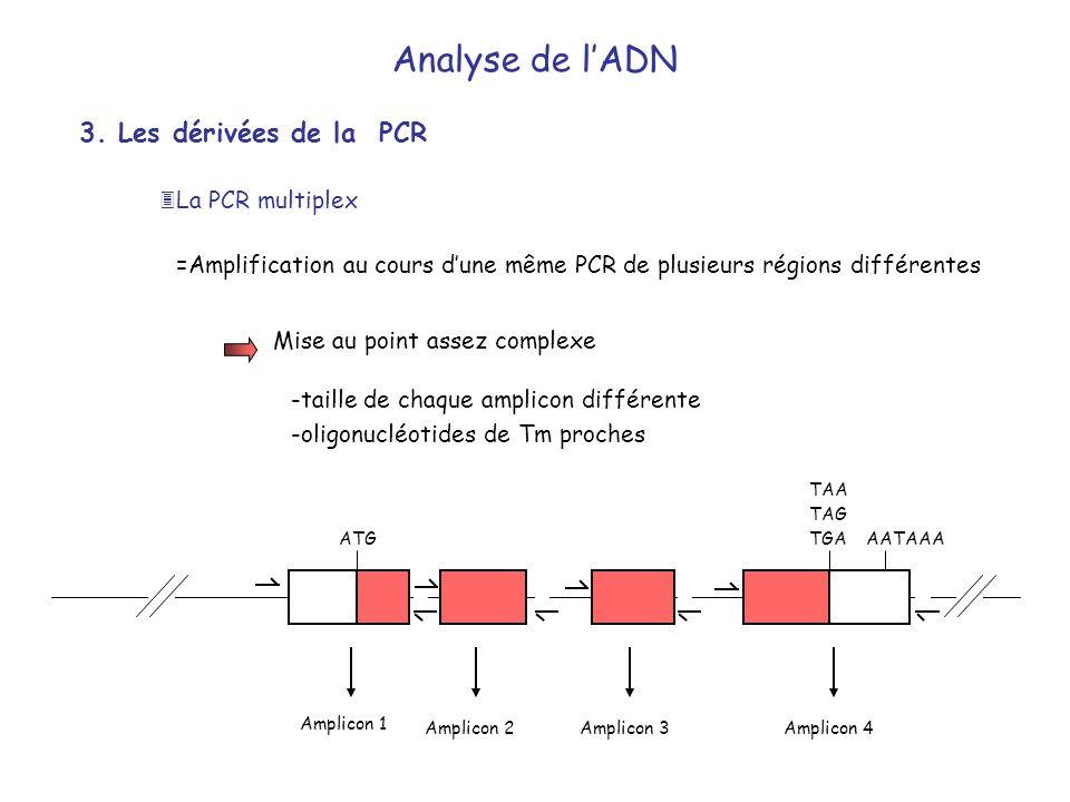 3. Les dérivées de la PCR =Amplification au cours dune même PCR de plusieurs régions différentes -taille de chaque amplicon différente -oligonucléotid