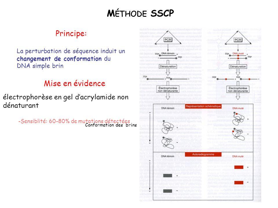 M ÉTHODE SSCP Principe: La perturbation de séquence induit un changement de conformation du DNA simple brin -Sensiblité: 60-80% de mutations détectées