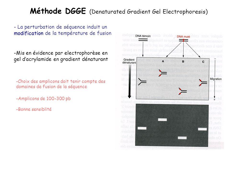 Méthode DGGE (Denaturated Gradient Gel Electrophoresis) - La perturbation de séquence induit un modification de la température de fusion -Bonne sensib