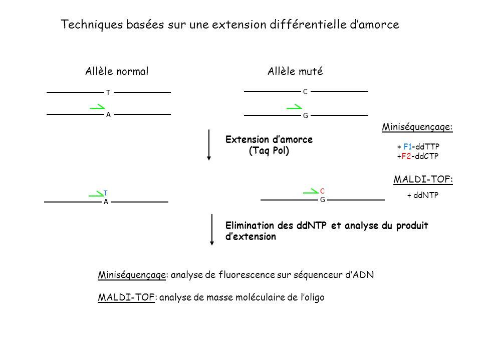 Techniques basées sur une extension différentielle damorce MALDI-TOF: Miniséquençage: Allèle normalAllèle muté T A C G Extension damorce (Taq Pol) + F