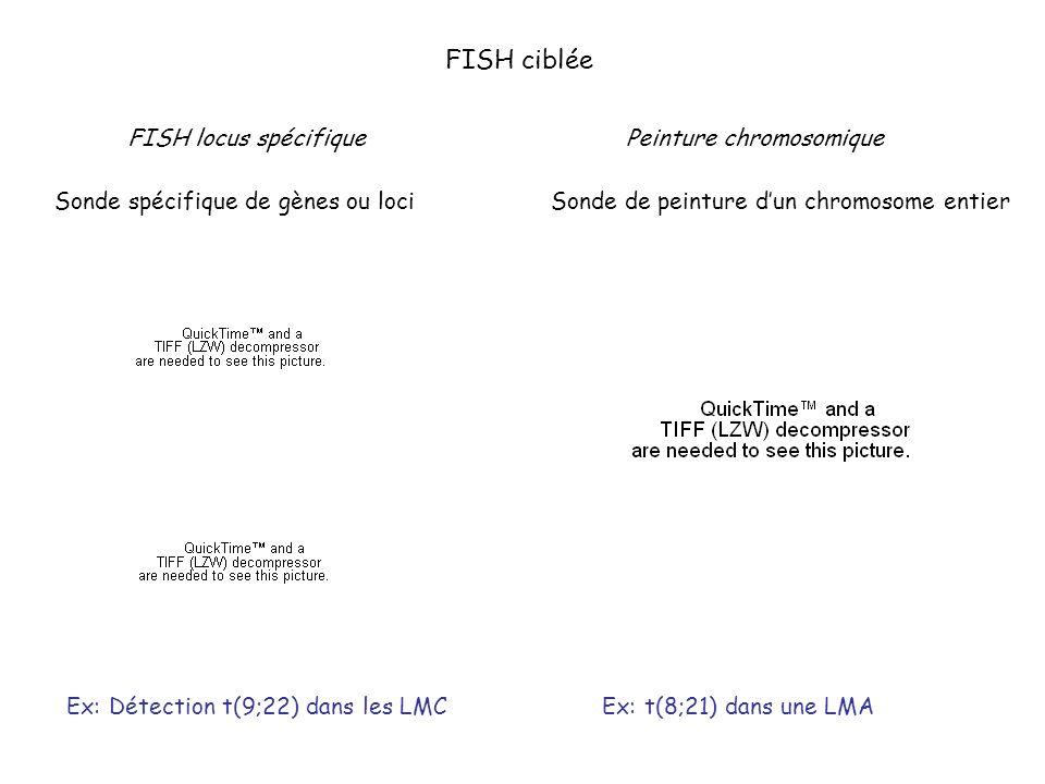 FISH ciblée FISH locus spécifique Sonde spécifique de gènes ou loci Peinture chromosomique Sonde de peinture dun chromosome entier Ex: Détection t(9;2