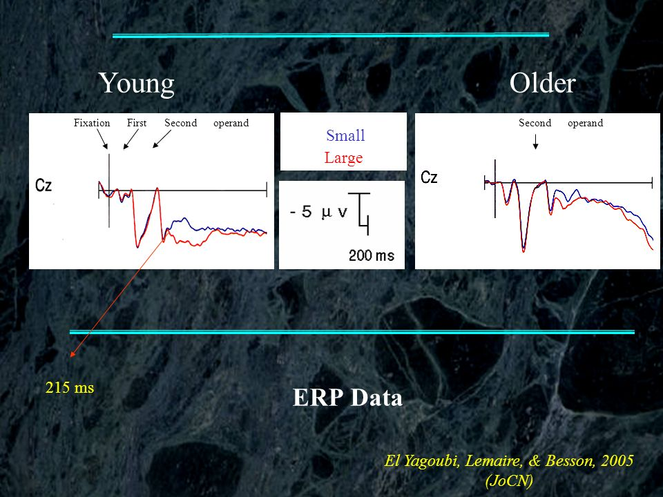 ERP Data YoungOlder Fixation First Second operand Small Large Second operand El Yagoubi, Lemaire, & Besson, 2005 (JoCN) 215 ms