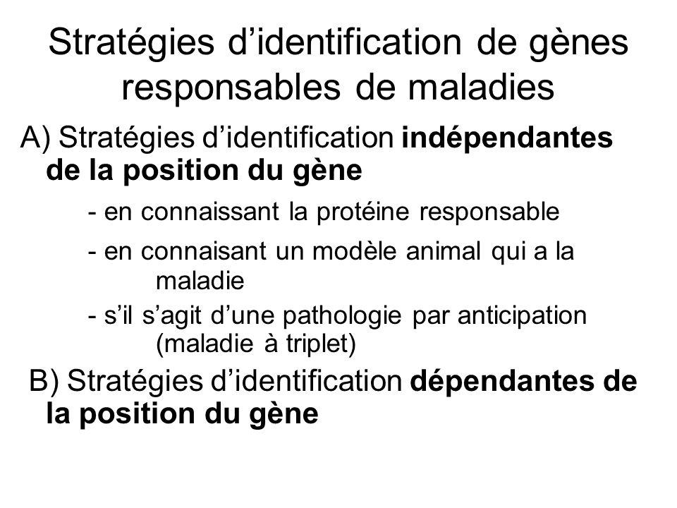 Stratégies didentification de gènes responsables de maladies A) Stratégies didentification indépendantes de la position du gène - en connaissant la pr