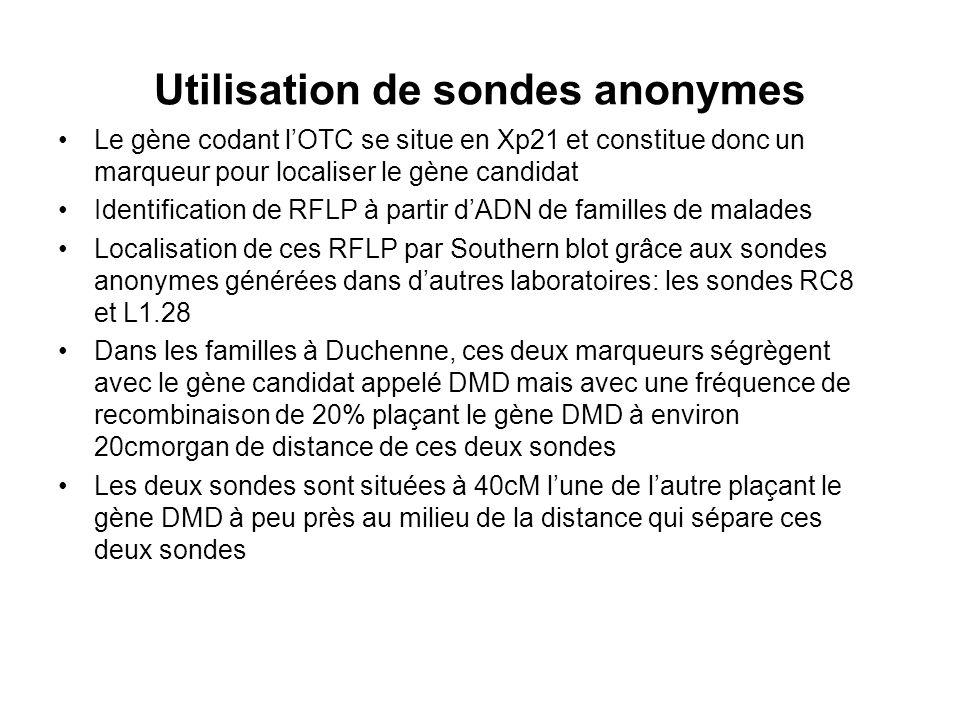 Utilisation de sondes anonymes Le gène codant lOTC se situe en Xp21 et constitue donc un marqueur pour localiser le gène candidat Identification de RF