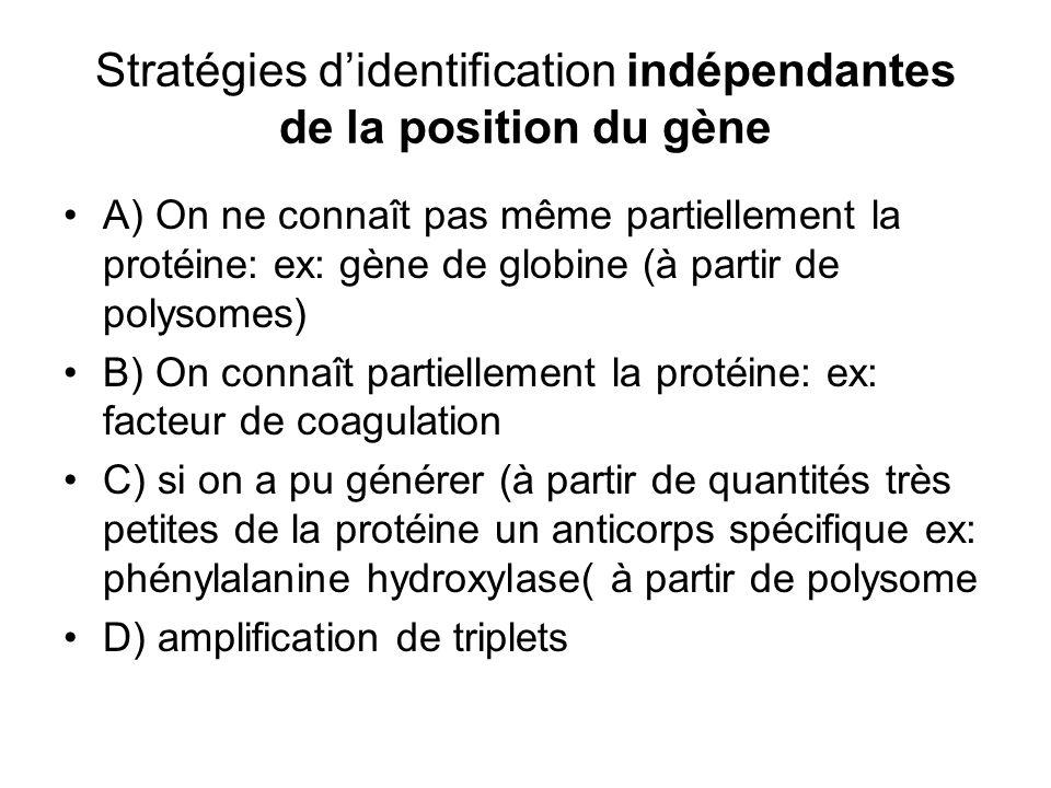 Stratégies didentification indépendantes de la position du gène A) On ne connaît pas même partiellement la protéine: ex: gène de globine (à partir de