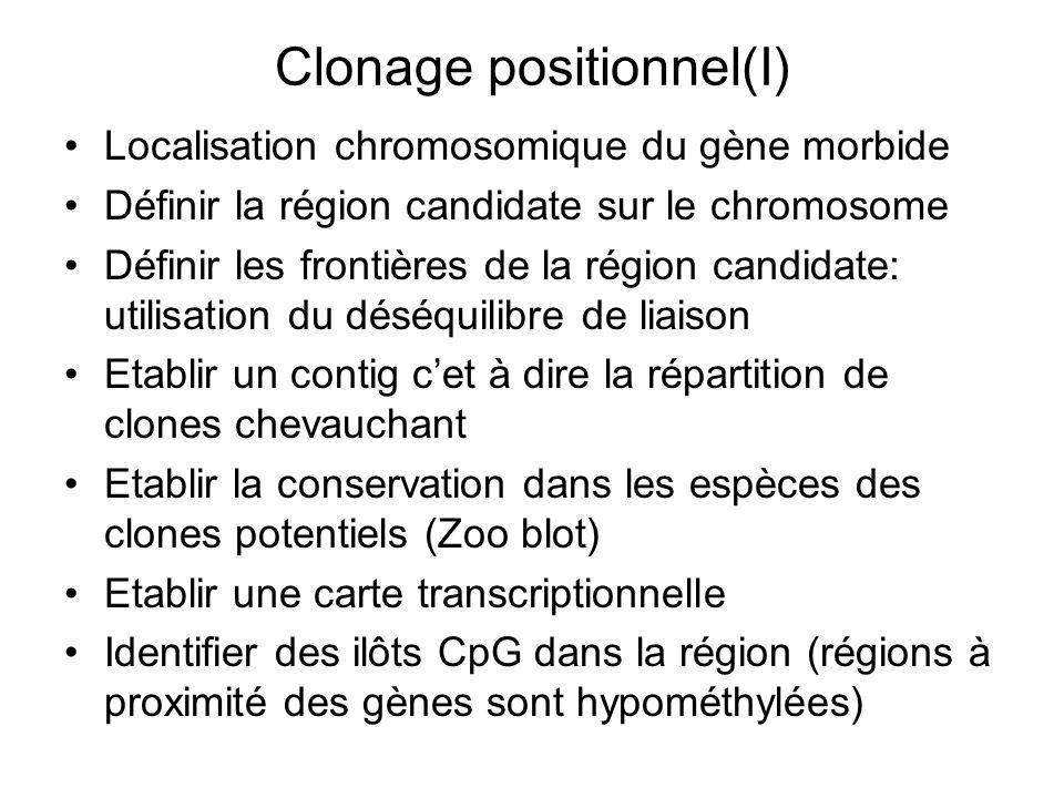 Clonage positionnel(I) Localisation chromosomique du gène morbide Définir la région candidate sur le chromosome Définir les frontières de la région ca
