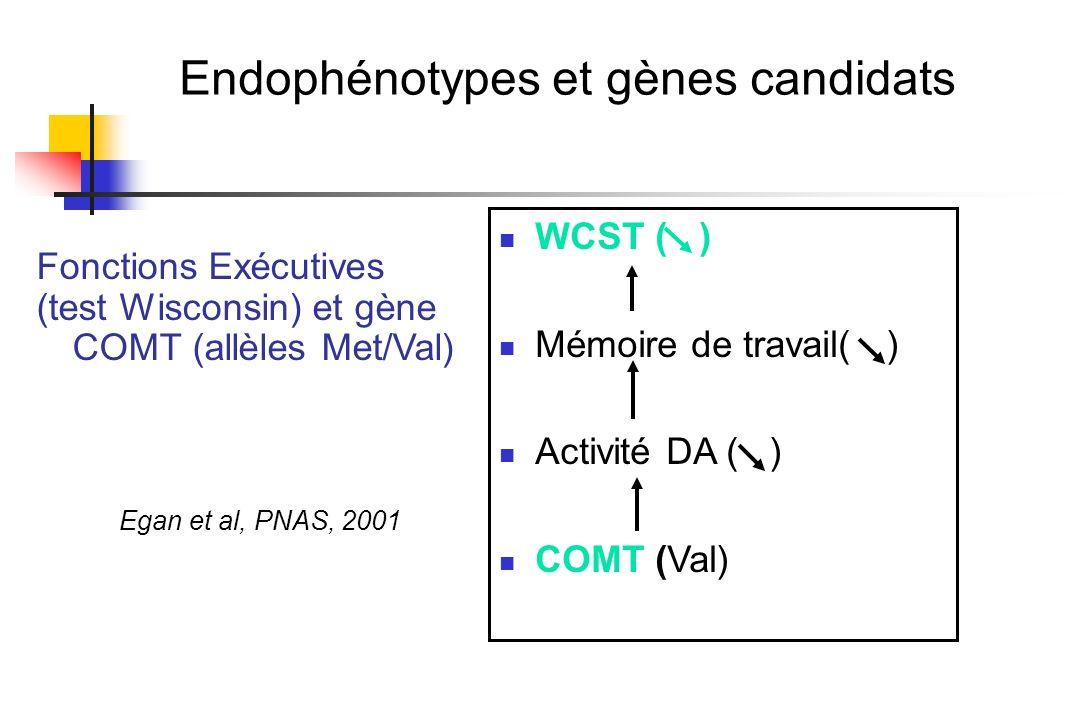 Endophénotypes et gènes candidats Fonctions Exécutives (test Wisconsin) et gène COMT (allèles Met/Val) Egan et al, PNAS, 2001 WCST ( ) Mémoire de trav