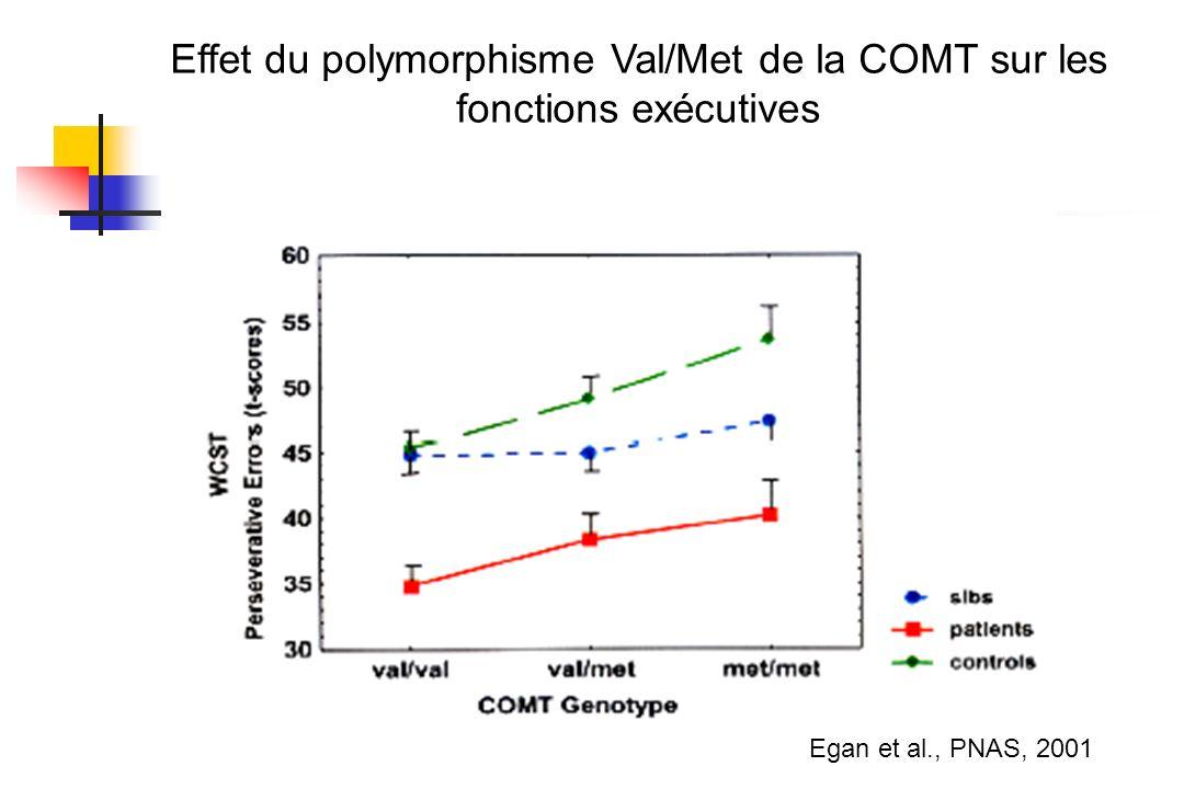 Egan et al., PNAS, 2001 Effet du polymorphisme Val/Met de la COMT sur les fonctions exécutives