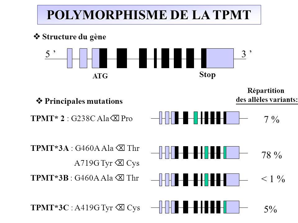 Principales mutations ATG Stop 5 3 Structure du gène POLYMORPHISME DE LA TPMT TPMT* 2 : G238C Ala Pro TPMT*3A : G460A Ala Thr A719G Tyr Cys TPMT*3B :