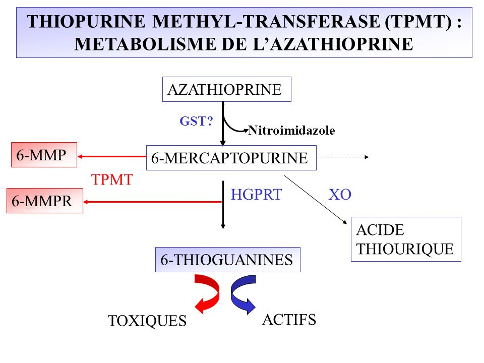 THIOPURINE METHYL-TRANSFERASE (TPMT) : METABOLISME DE LAZATHIOPRINE AZATHIOPRINE 6-MERCAPTOPURINE TPMT HGPRTXO 6-MMP 6-THIOGUANINES ACIDE THIOURIQUE A