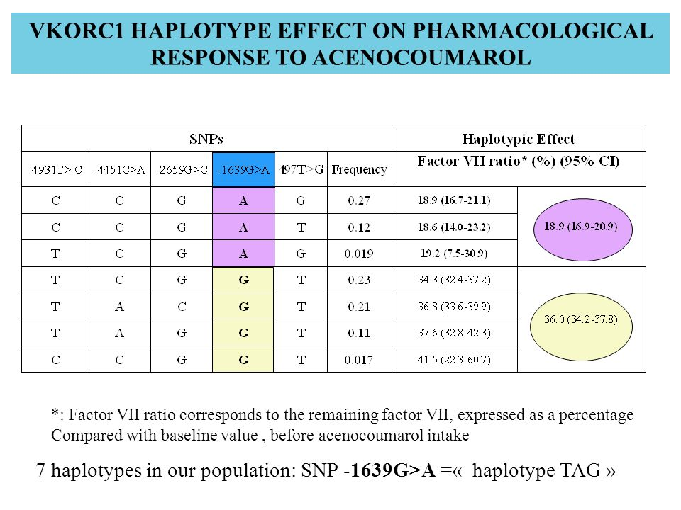VKORC1 HAPLOTYPE EFFECT ON PHARMACOLOGICAL RESPONSE TO ACENOCOUMAROL 7 haplotypes in our population: SNP -1639G>A =« haplotype TAG » *: Factor VII rat