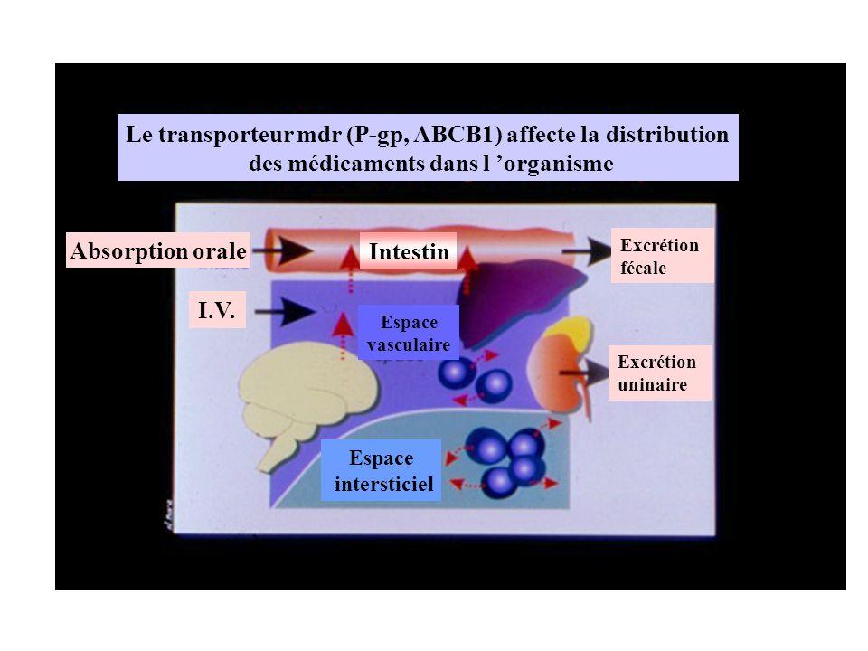 Absorption orale Espace vasculaire Intestin I.V. Excrétion fécale Excrétion uninaire Le transporteur mdr (P-gp, ABCB1) affecte la distribution des méd