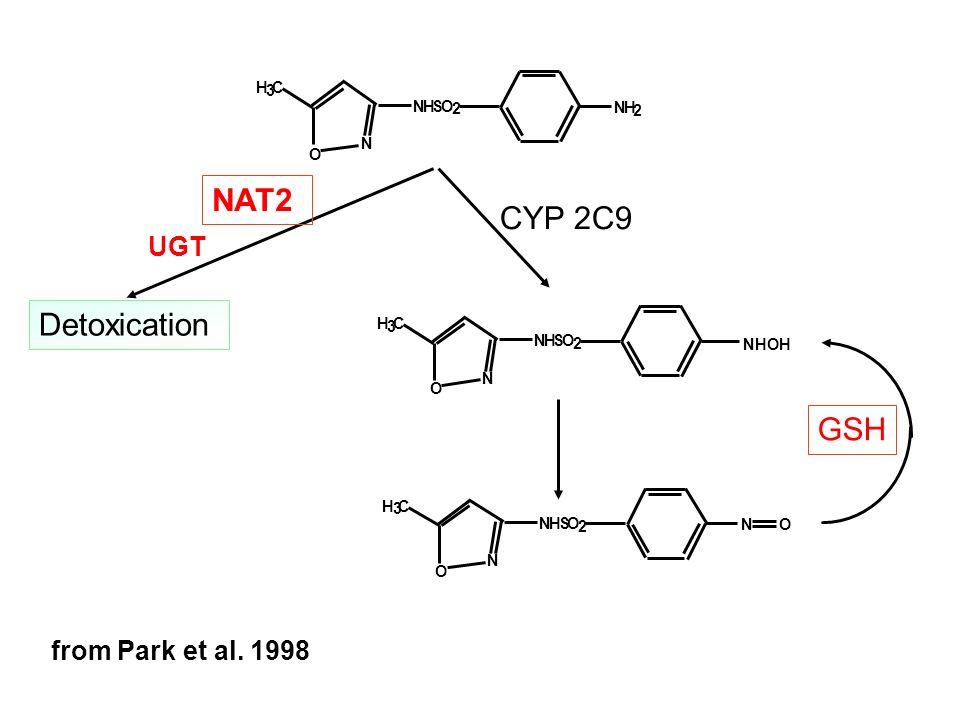 N O NHSO 2 H 3 C NH 2 N O NHSO 2 H 3 C NHOH N O NHSO 2 H 3 C NO NAT2 UGT GSH from Park et al. 1998 Detoxication CYP 2C9