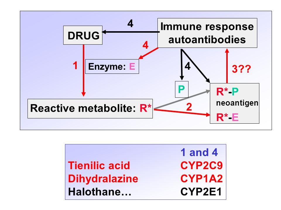 DRUG Immune response autoantibodies Reactive metabolite: R* R*-P neoantigen R*-E Enzyme: E P 1 2 3?? 4 4 4 1 and 4 Tienilic acidCYP2C9 DihydralazineCY