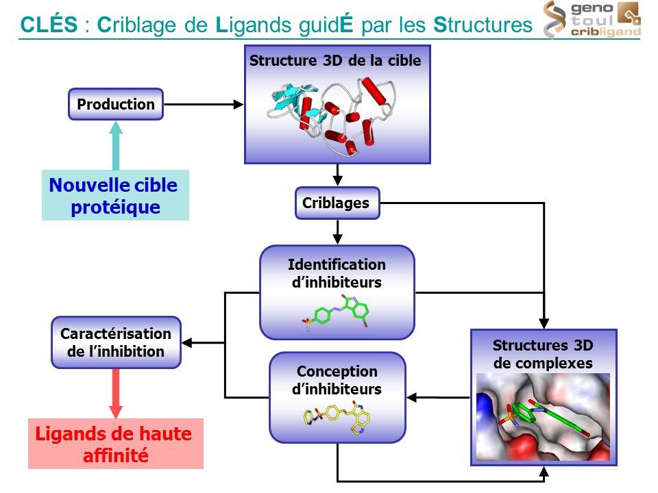 Nouvelle cible protéique Production Structure 3D de la cible Criblages Structures 3D de complexes Ligands de haute affinité Identification dinhibiteur