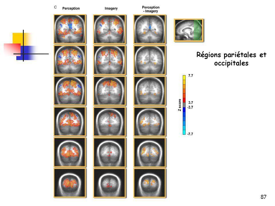87 Régions pariétales et occipitales