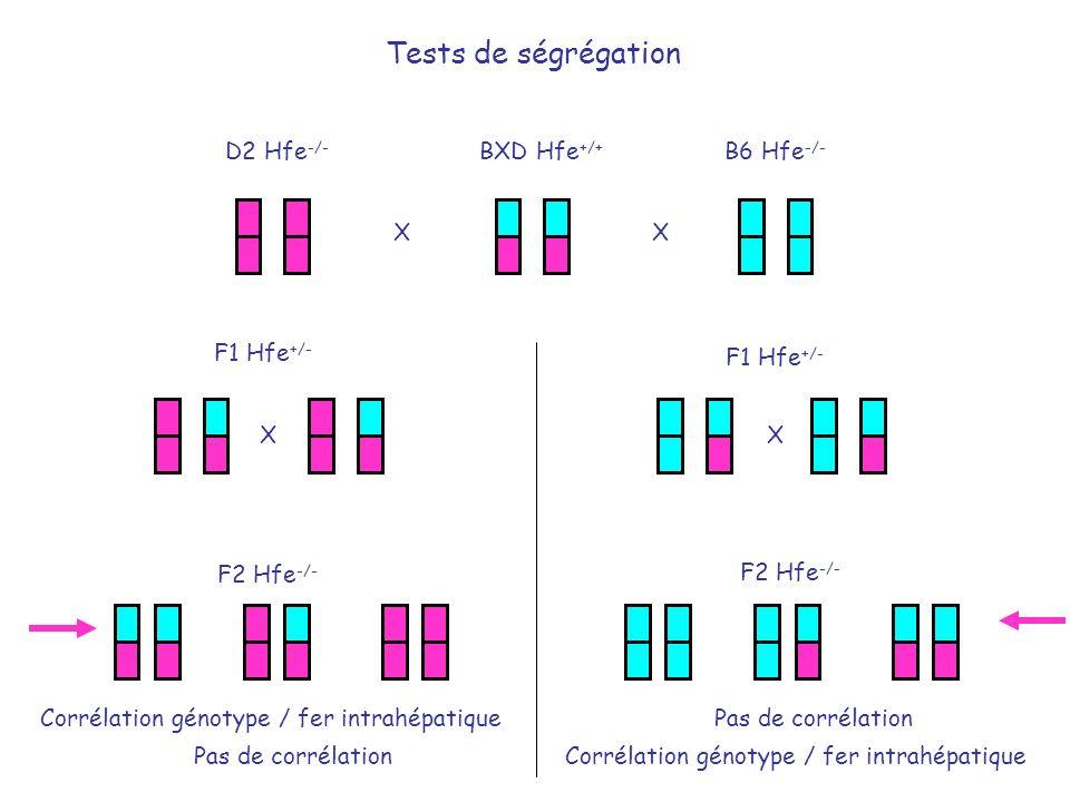 BXD Hfe +/+ D2 Hfe -/- B6 Hfe -/- F1 Hfe +/- X X XX F2 Hfe -/- F1 Hfe +/- F2 Hfe -/- Tests de ségrégation Corrélation génotype / fer intrahépatiquePas